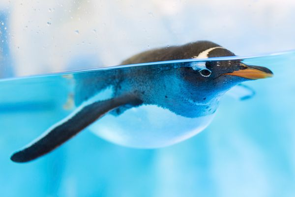 "<a href=""http://www.longislandaquarium.com/adventure/penguin-encounter/"" target=""_blank"">Have a close up encounter with an Af"