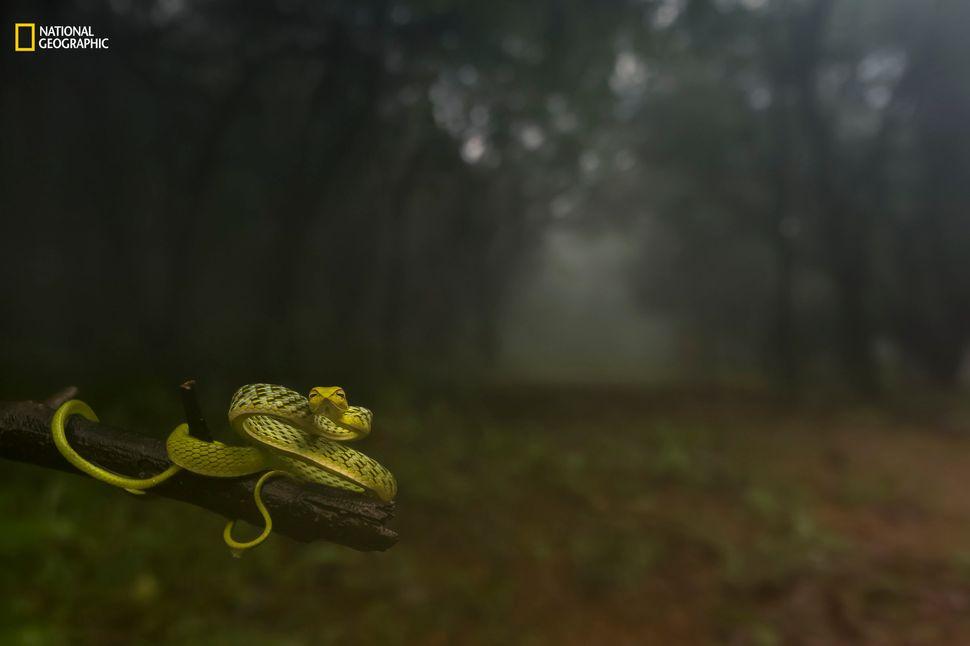 "Varun Aditya: ""I shot this at Amboli, Maharashtra, India, on July 24, 2016, during a morning stroll into the blissful rain fo"