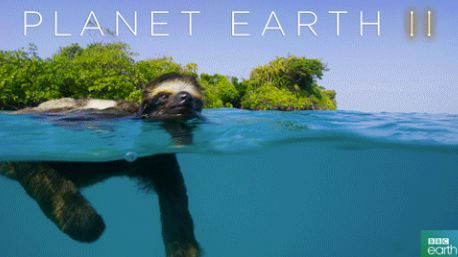 17 Life Lessons We Learned From Planet Earth 2