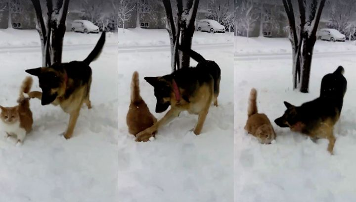 Katniss the dog was filmed slapping her frenemy, Kiwi the cat, into the snow face first while playing outside.