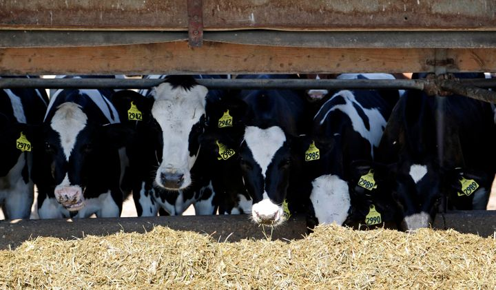The agriculture industry is linked to a large share of methane emissions, which scientists say have risen dramatically in the