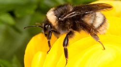 This Is Having A Drastic Effect On Bees Buzzing And Collecting