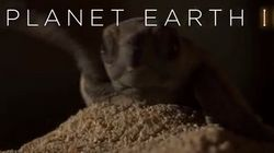 BBC Reveals Happy Ending To 'Planet Earth II's' Most Heartbreaking