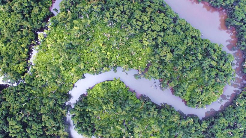 Mangrove areas in Samoa.