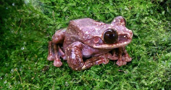 In September, Toughie, the loneliest frog on Earth, died at the age of 12. He's believed to have been the very las