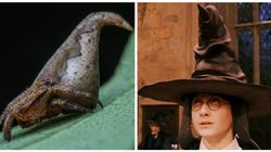 This New Spider Species Has Been Named After The Harry Potter Sorting