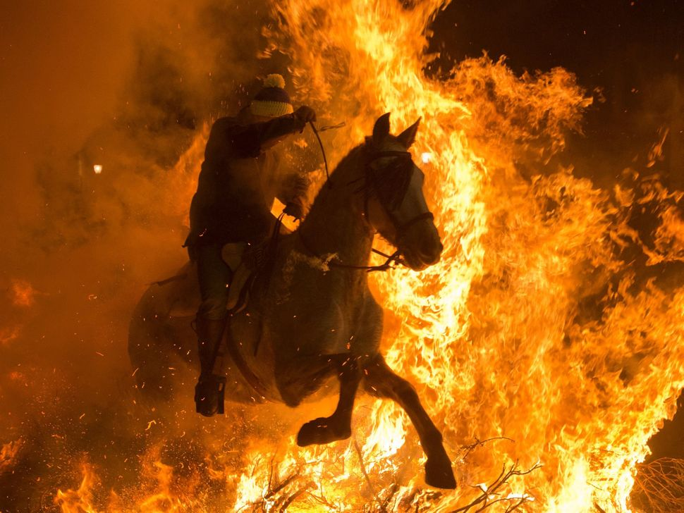 A man on a horsejumps over a bonfire in the Spanish central village of San Bartolome de Pinares in the province of Avil