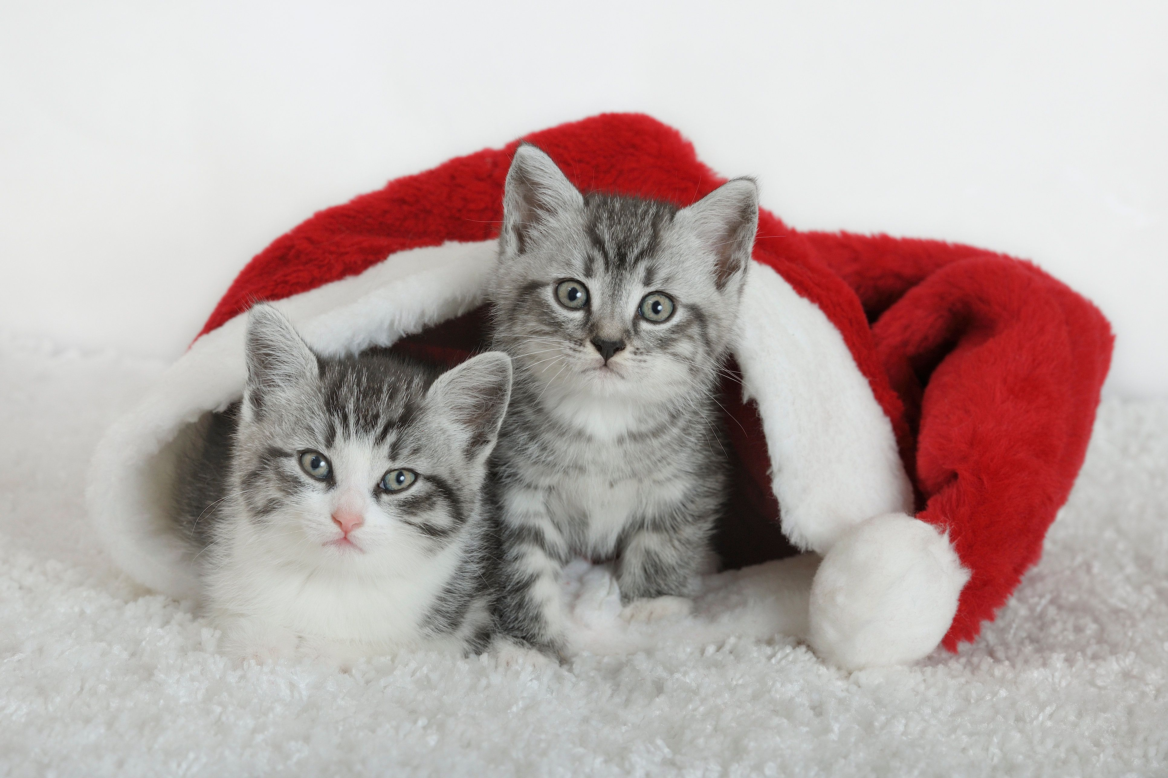 The Christmas Cats Of Instagram Are Coming Out To