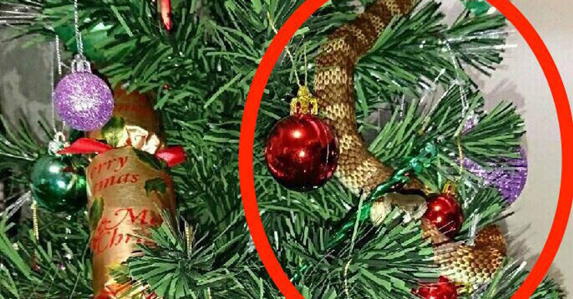 Deadly Snake Hides In Christmas Tree Just Like A