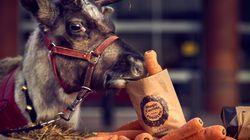 Kids Can Pick Up Free 'Wonky Carrots' For Santa's Reindeers At