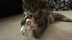 These Cats Are Super Excited About Their Christmas