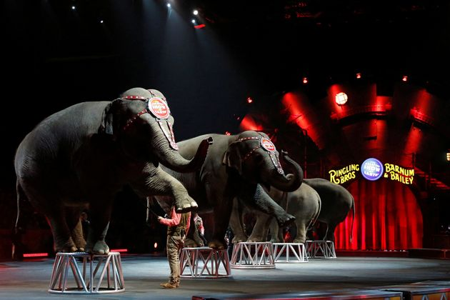 Ringling Bros and Barnum & Bailey Circus' performing elephants appear in their last show in Wilkes-Barre,...