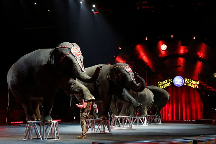 Ringling Bros and Barnum & Bailey Circus' performing elephants appear in their last show in Wilkes-Barre, Pennsylvania, U