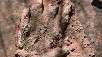 This photo made available by the Director General Communication of the Government of Catalonia on Monday, May 2, 2016, shows a footprint of a dinosaur discovered in early April by a person out walking in Olesa de Montserrat, 40 kilometers north of Barcelona. The government says the footprint of a dinosaur that roamed Spain 230 million years ago has been found in an excellent state of conservation in northeastern Catalonia.