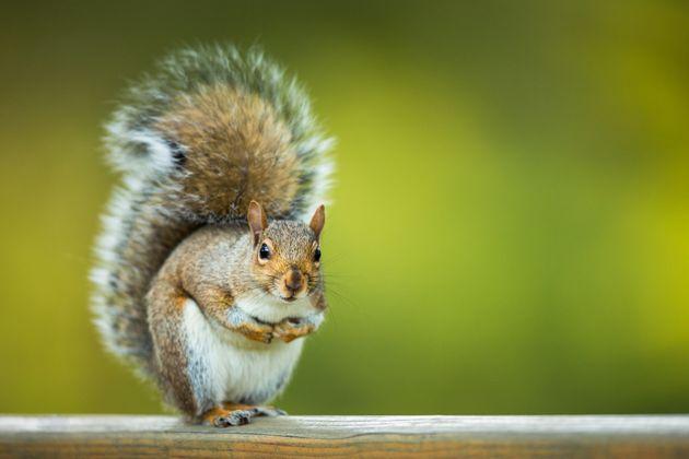 Vigilante squirrel not