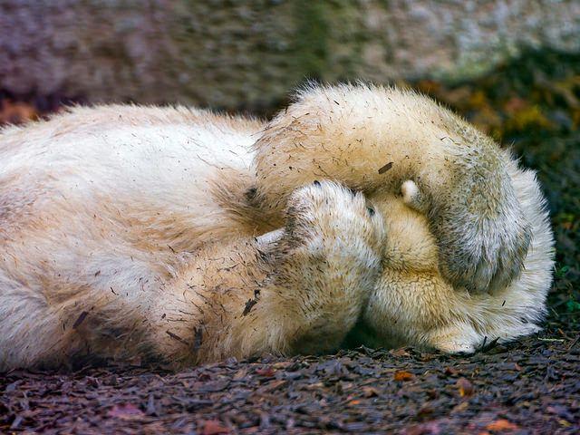 Polar bear has had enough