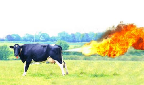 """<a rel=""""nofollow"""" href=""""https://commons.wikimedia.org/wiki/File%3ACow-fart.png"""" target=""""_blank"""">Cow Farting</a>"""