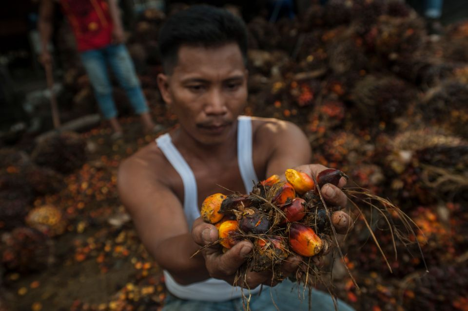 A worker take the palm oil fruit in Langkat, North Sumatra province, Indonesia in this file