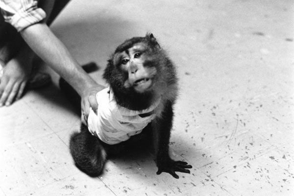 PETA got its start with an open investigation of monkeys from a Silver Spring medical lab.