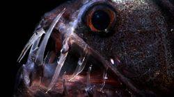 This Deep-Sea Fisherman Has Caught A Treasure Trove Of Underwater