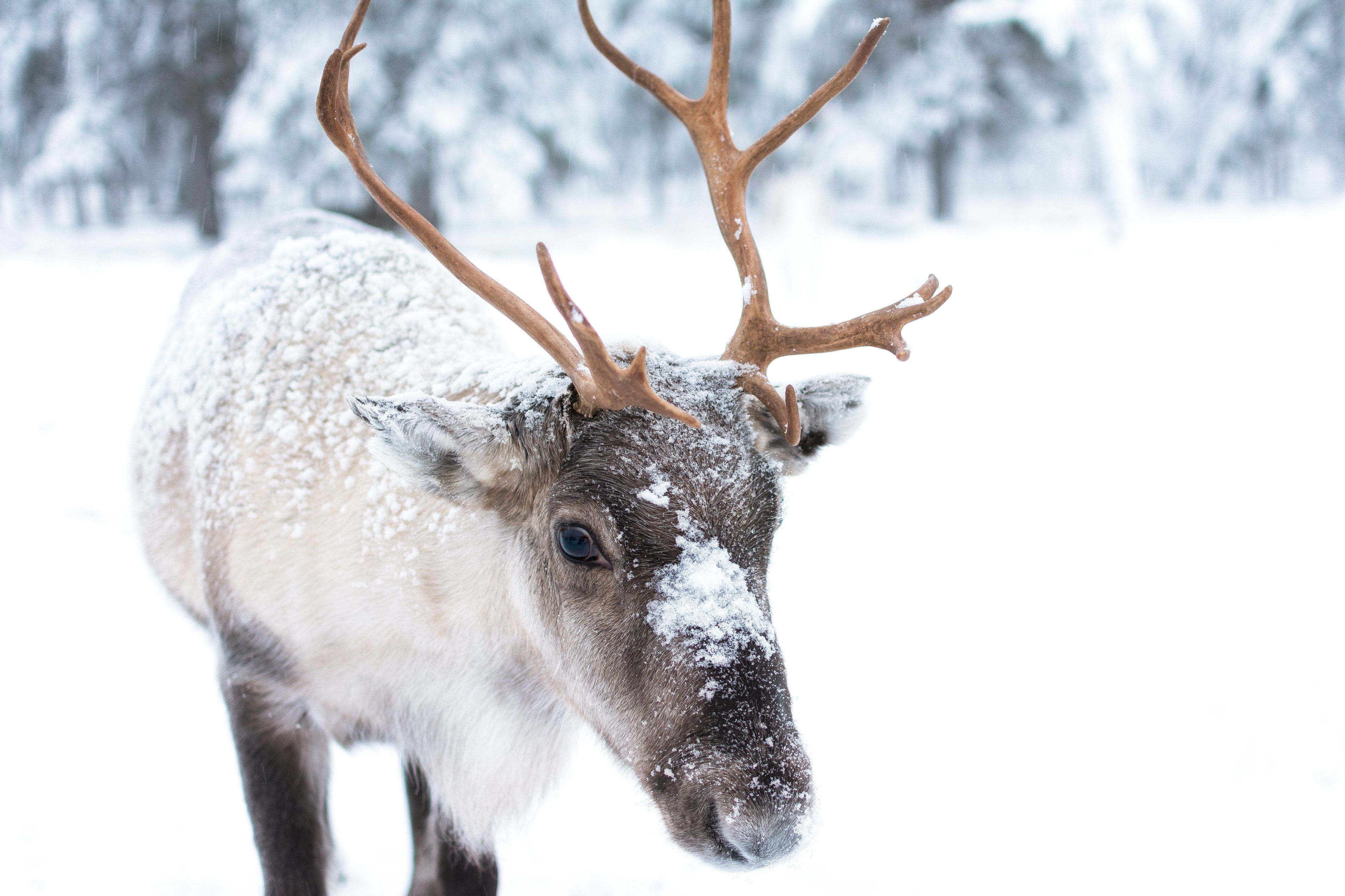 Rudolph Is Actually Helping To Slow Down Climate