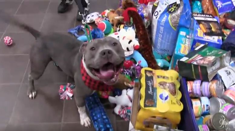 This Shelter Gave Their Dogs And Cats An Awesome Christmas