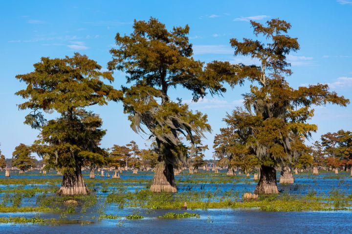 Ah, swamps.