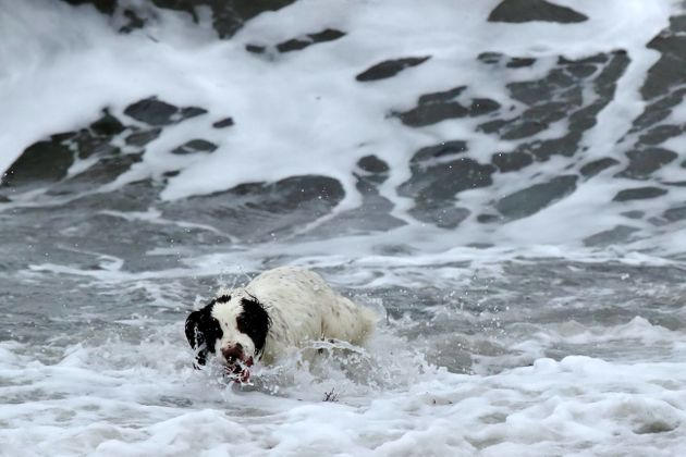 A dog enjoys the surf and big waves in Lyme Regis, Dorset on Friday as Barbara hit the