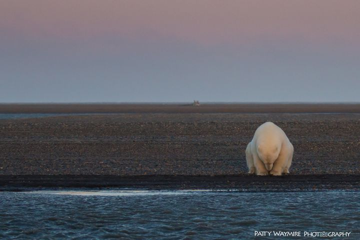 """Patty Waymire says she shot """"No Snow, No Ice"""" after being struck by how """"contemplative"""" the bear appeared to her."""