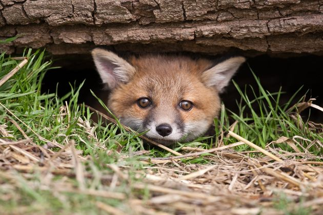Opposition to legalising hunting for 'sport' is at an all-time high of 84%, new