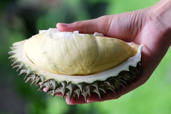 """Chances are that by now, you've heard of this<a href=""""http://www.huffingtonpost.com/2015/04/21/what-is-durian_n_7111232"""