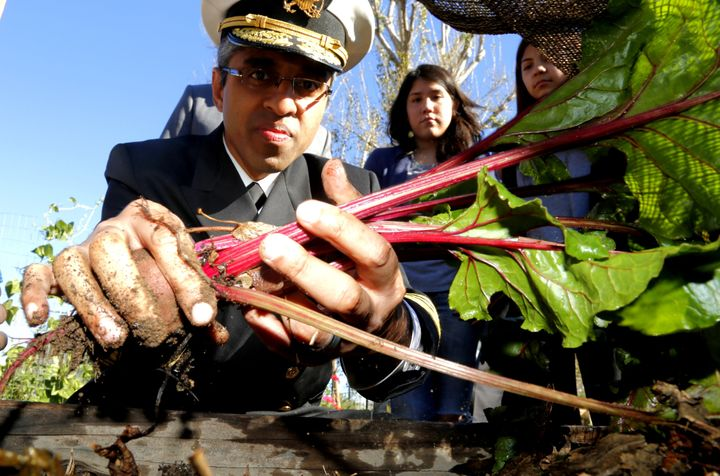 United States Surgeon General Vivek H. Murthy pulls beets out of a raised planter in the Freemont High School Garden in Los A