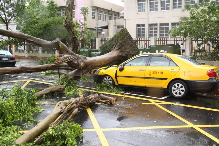 Trees are blown over by Typhoon Soudelor on August 8, 2015 in Taipei, Taiwan of China.