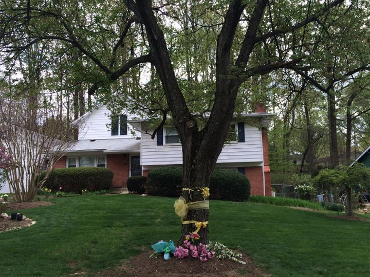 Ribbons and flowers surround a tree outside the Weinstein home in Rockville, Maryland, on April 22, 2015. Warren Weinstein wa