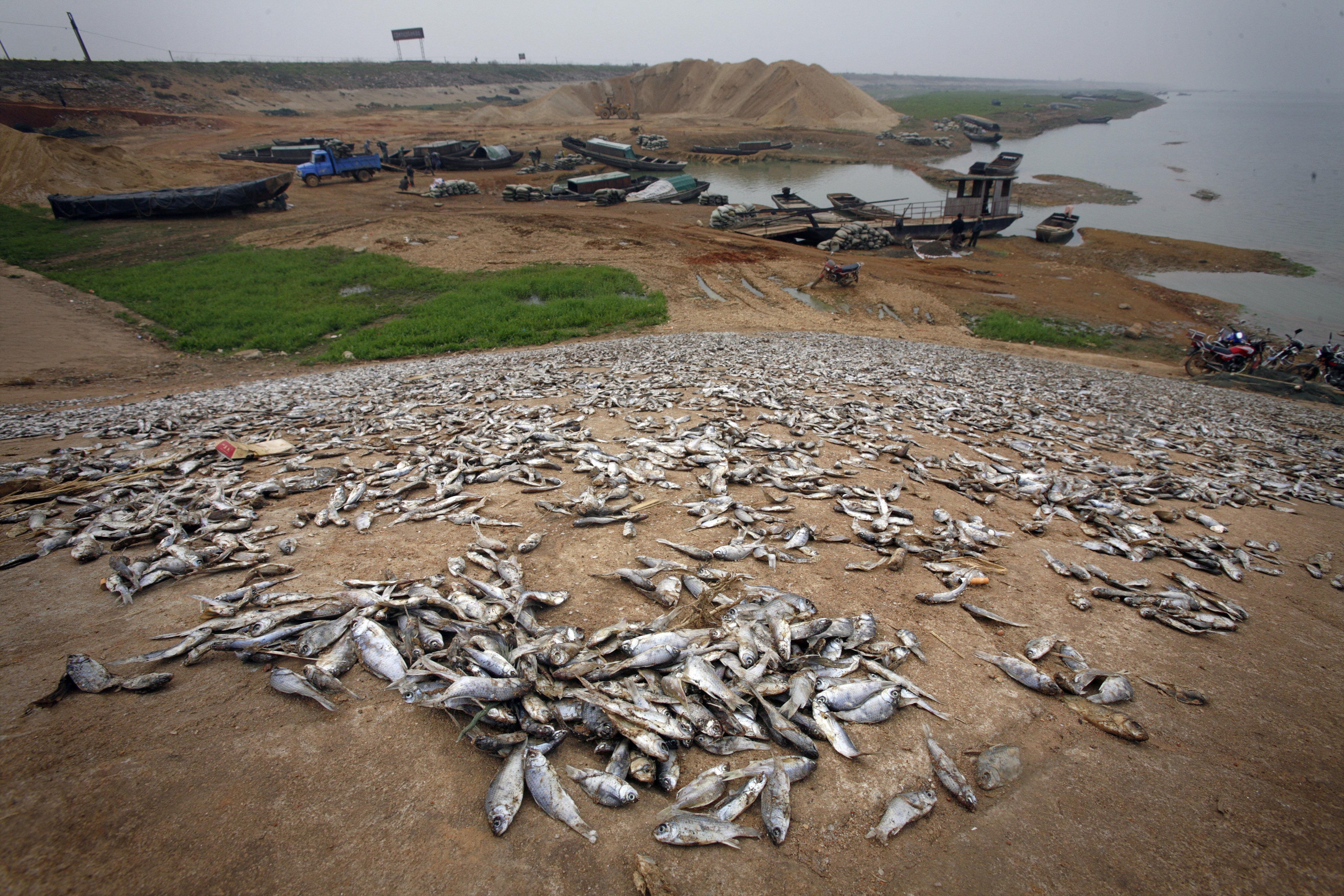 China's Largest Freshwater Lake Is