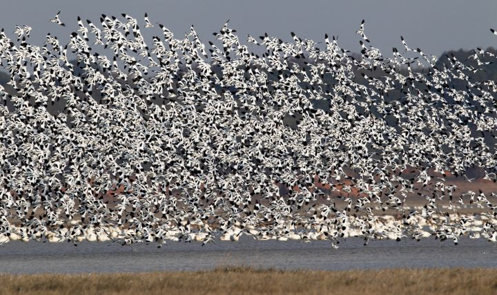 Half a million migratory birds, including the critically endangered Siberian crane, are said to flock to China's Poyang Lake