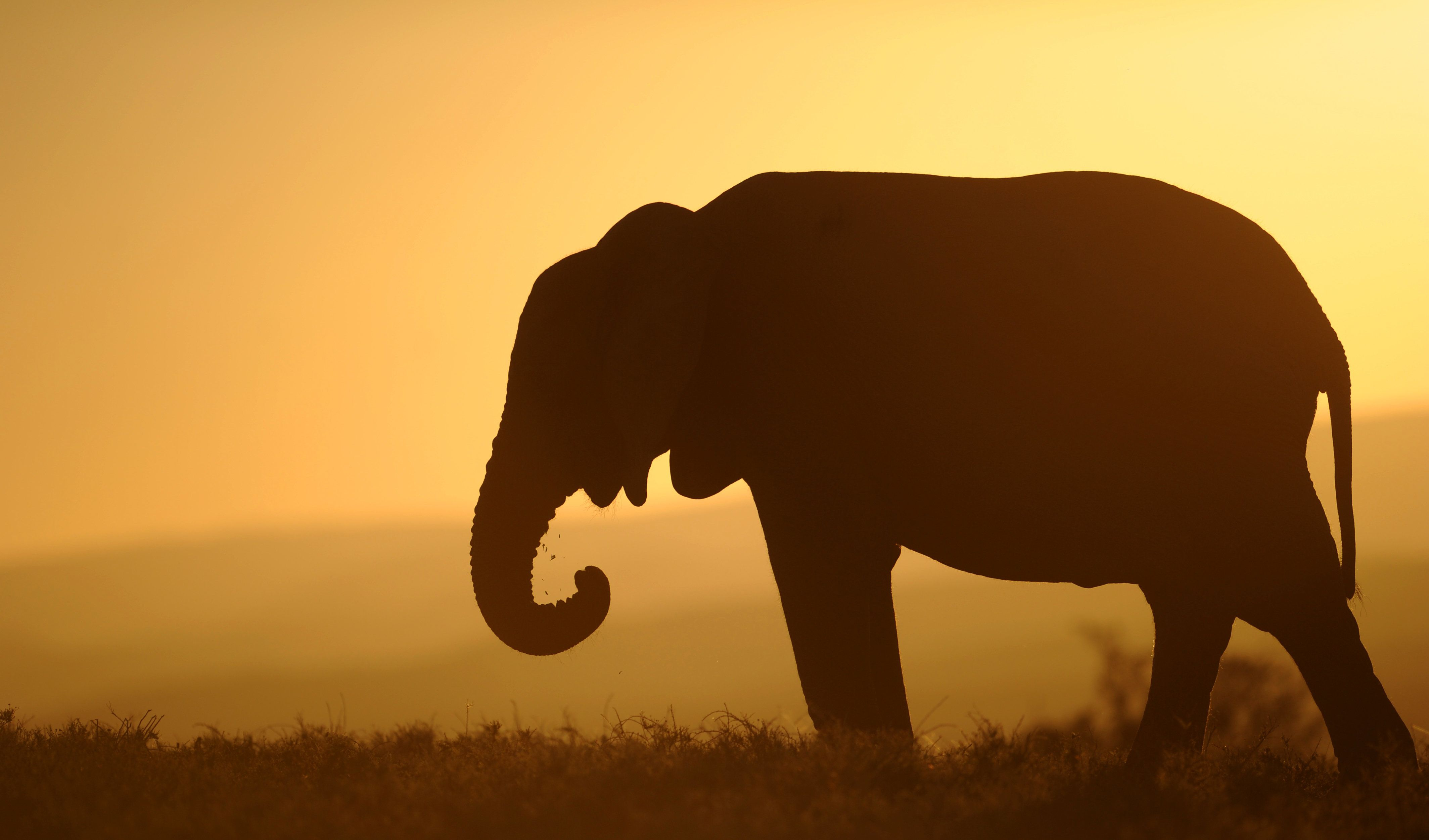 China Plans To Ban Domestic Ivory Trade By