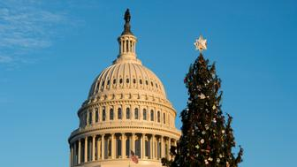 UNITED STATES - DECEMBER 7: The U.S. Capitol Christmas Tree stands on the West Lawn of the Capitol on Wednesday, Dec. 7, 2016. (Photo By Bill Clark/CQ Roll Call)
