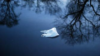 white plastic bag floating in a stream at dusk amongst tree reflections