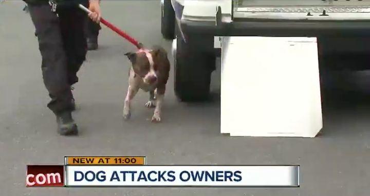 It took a tranquilizer gun, beanbag gun and stun gunto subdue the dog.