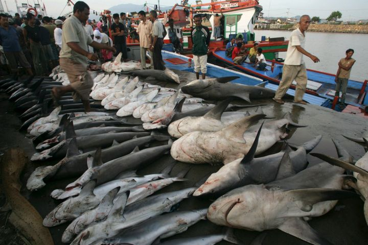 Sharks on display in a fish market in Indonesia.