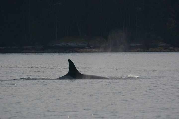 Granny was recognizable by a small nick on her dorsal fin.