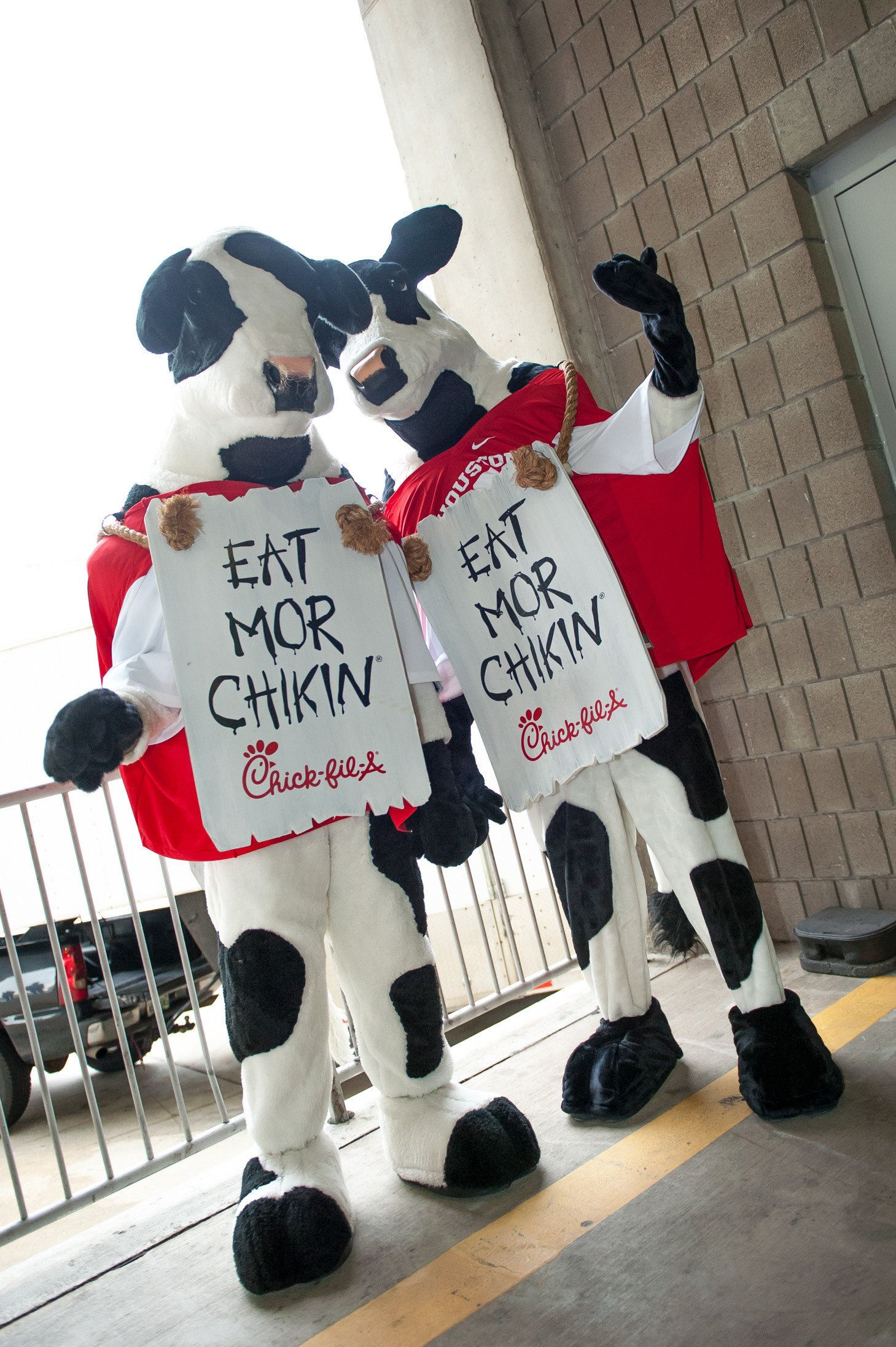 31 December 2015: The Houston Cougars Chick-fil-A cows before the 2015 Chick-Fil-A Peach Bowl between the Florida State Seminoles and the Houston Cougars at the Georgia Dome in Atlanta, Georgia. (Photo by John Adams/Icon Sportswire) (Photo by John Adams/Icon Sportswire/Corbis via Getty Images)