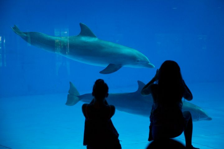 Dolphins at the National Aquarium in Baltimore in Aug. 2015.