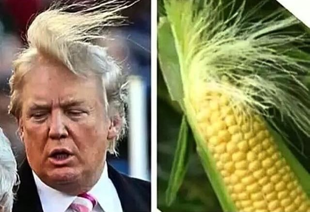 Image result for vegetable trump