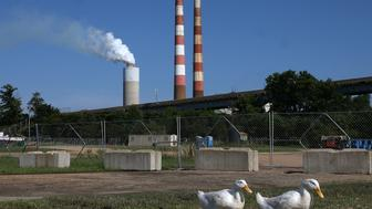 NEWBURG, MD - JUNE 29: Two white ducks walk along the Beach at Aqualand Marina as emissions spew out of a large stack nearby at the coal-fired Morgantown Generating Station on the Potomac River on June 29, 2015 in Newburg, Maryland. Today the U.S. Supreme Court ruled against the Environmental Protection Agency's (EPA) effort to limit certain power plant emissions -- saying the agency 'unreasonably' failed to consider the cost of the regulations.  (Photo by Mark Wilson/Getty Images)