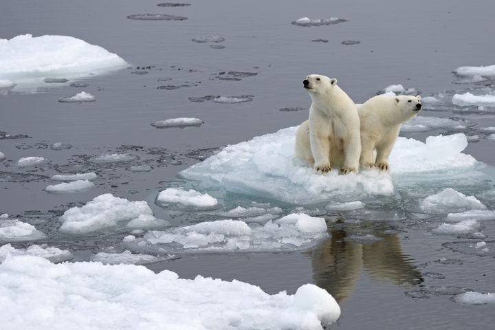 Polar bears on an ice floe on Spitsbergen island in Norway's Svalbard archipelago.