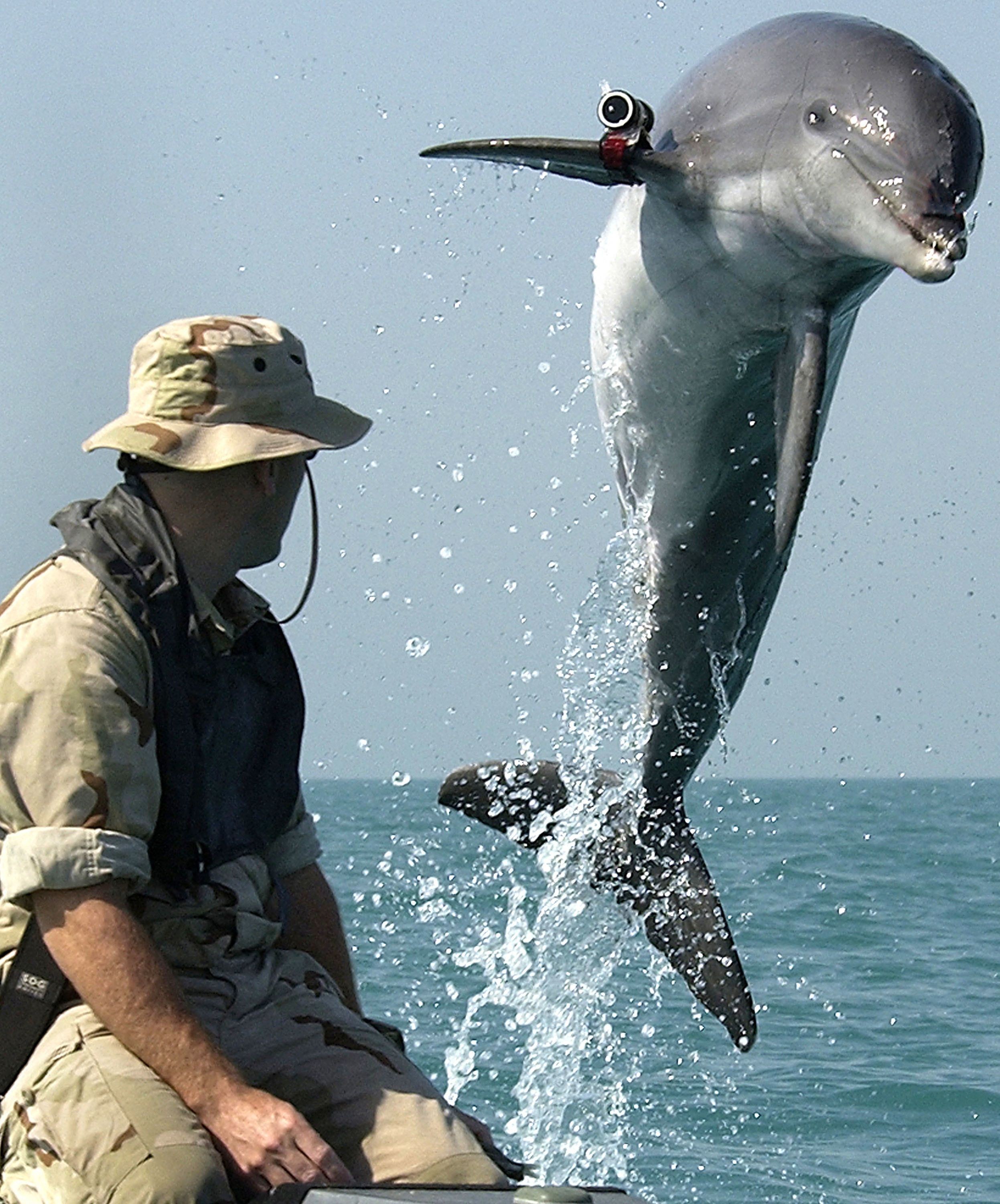 "A U.S. Navy-trained bottlenose dolphin with his handler. Dolphins are better than machines <a href=""http://news.nationalgeogr"