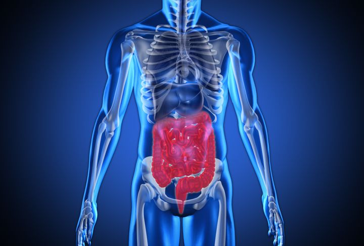 Scientists Have Discovered A New Organ In The Digestive System