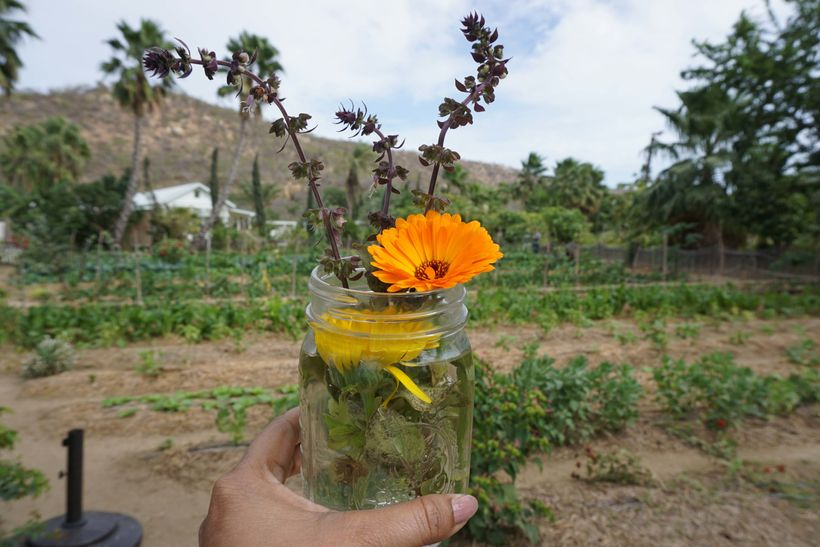 Flora Farms An Authentic Farm To Table Experience In Cabo Mexico - Farm to table philosophy